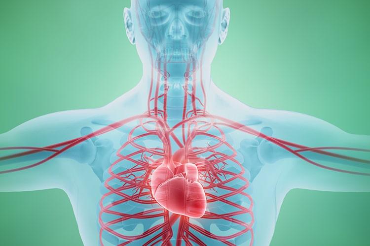Acupuntura para circulación y vascular en Clínica Fuensalud