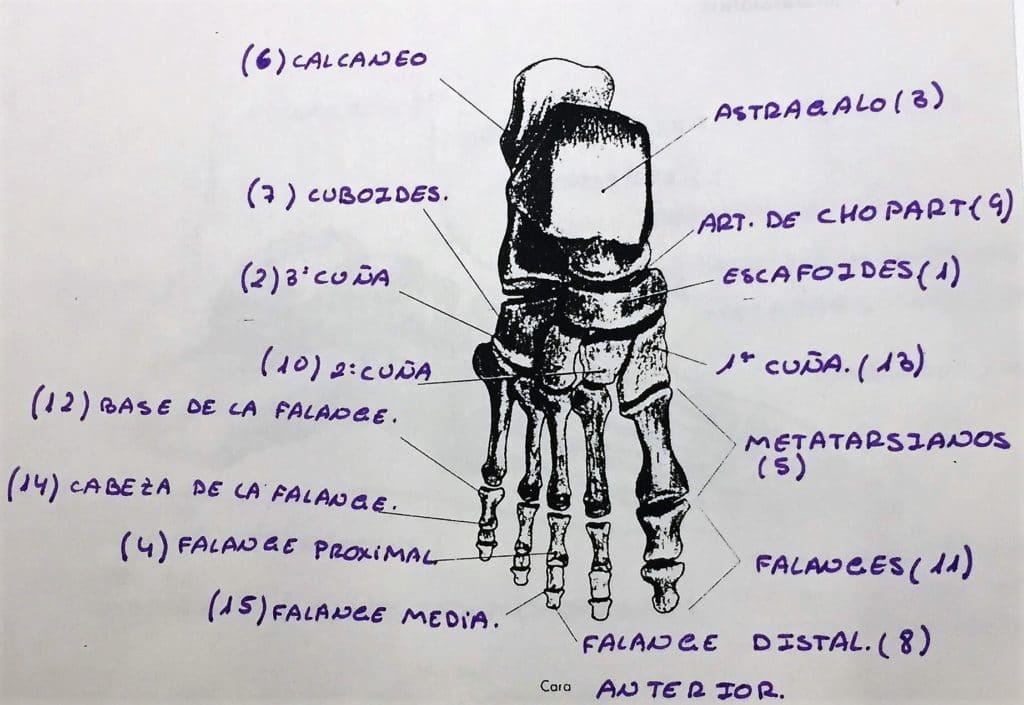 esguince de tobillo anatomía
