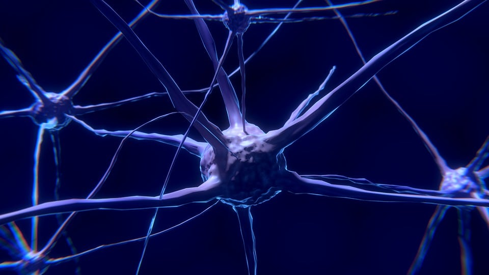 nervios del sistema nervioso central