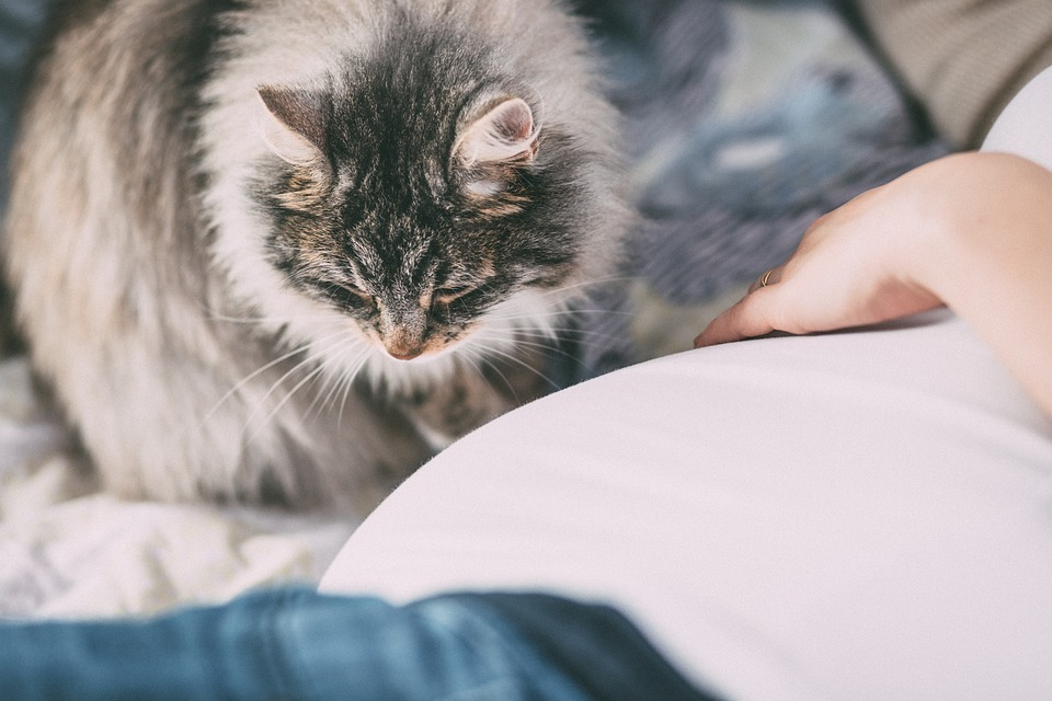 alergia al pelo de gato