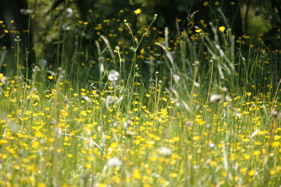 tipos de alergias polen