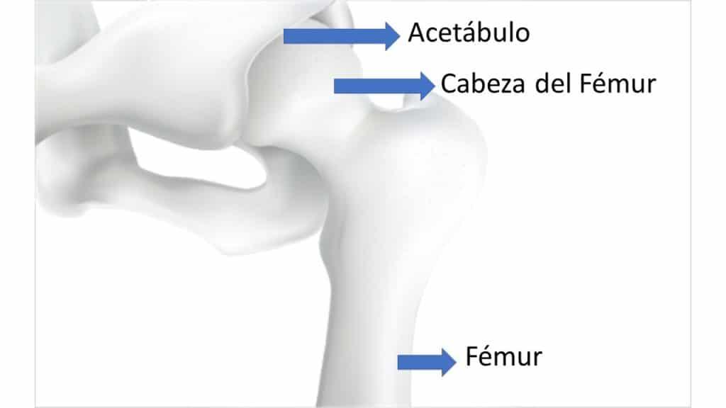 Anatomía de la cadera por Clínica Fuensalud