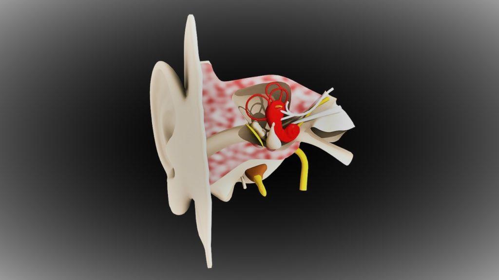 Anatomía del oído de Clínica Fuensalud