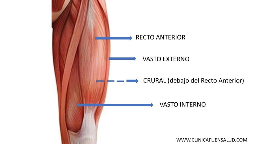 Anatomía del Cuádriceps por Clínica Fuensalud
