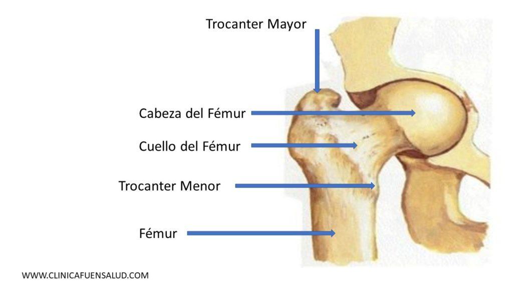 Anatomía de Cadera por Clínica Fuensalud